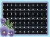 Popular 160W mono solar panel with TUV,UL,MCS