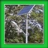 Solar Street Light of Low Cost Running